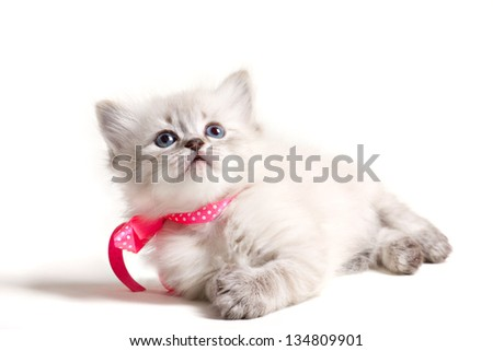 little charming kitten with pink bow lying and looking up isolated on white