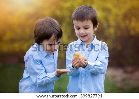 Little chick in child hands, cute little boy, holding cute 3 days old yellow chick, his brother watching him and enjoying the chicks - stock photo