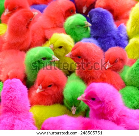 Little chicken colorful - stock photo