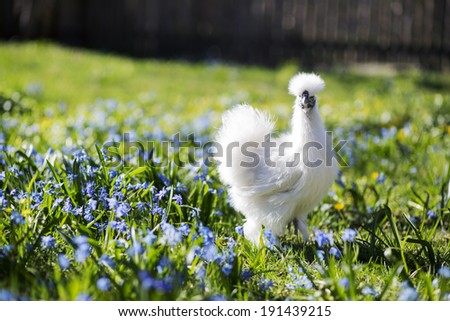 Little chicken in the grass - stock photo