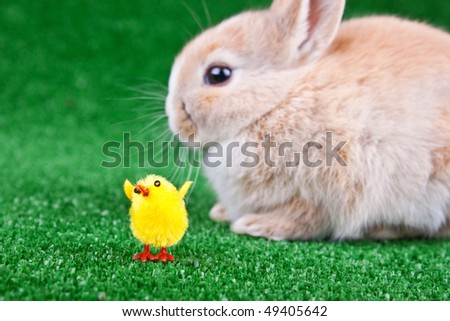 little chicken toy and a little rabbit in background