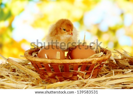 Little chicken with eggs in wicker basket on straw on bright background - stock photo