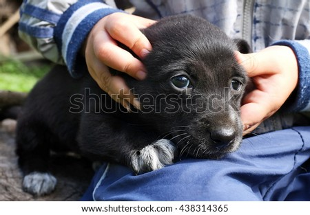 little child and a puppy - stock photo