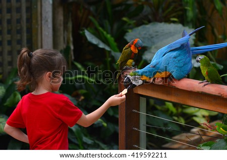 Little child (girl age 5-6) feed a Blue and Gold Macaw a native bird to central America and South America - stock photo