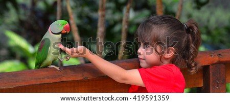 Little child (girl age 5-6) fLittle child feeds a Alexandrine Parrot native to India and South East Asia. - stock photo