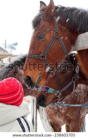 little children feeding horses outdoors - stock photo