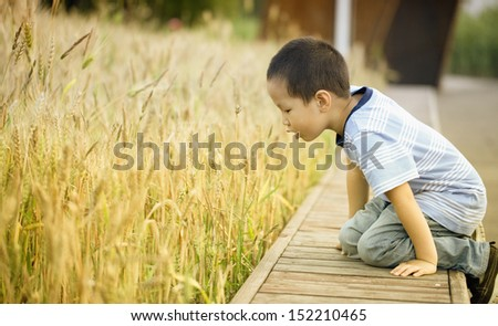 Little chinese boy on a wheat field