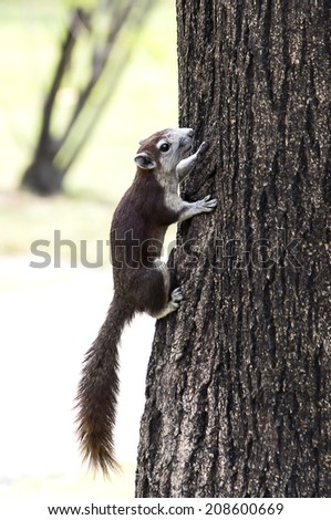 Little Chipmunk climb on tree in park.Close up Shot. - stock photo