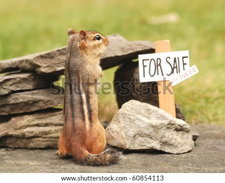 little chipmunk seeks a buyer to come and purchase his house - stock photo