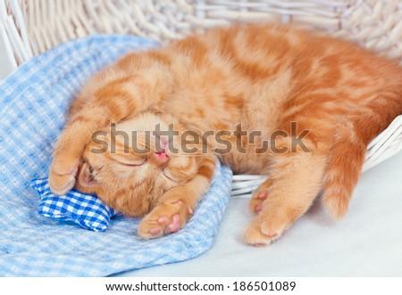 Little cream kitten sleeping on a blanket - stock photo