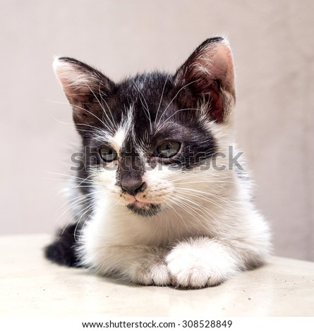 Little cute black and white kitten lay on white floor, selective focus on its eye, in square aspect frame - stock photo