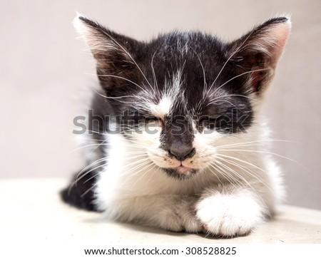 Little cute black and white kitten lay on white floor with half open eyelid, selective focus on its eye - stock photo