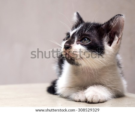 Little cute black and white kitten lay on white floor with neat position and look to sky, selective focus on its eye - stock photo