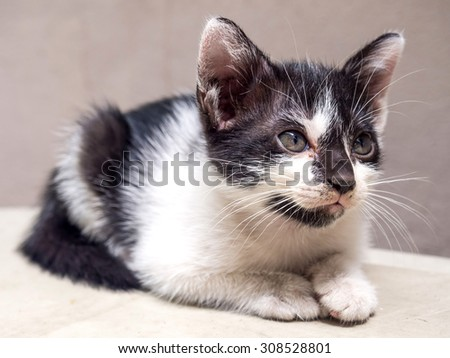 Little cute black and white kitten lay on white floor with neat position look to sky, selective focus on its eye - stock photo