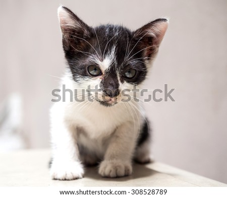 Little cute black and white kitten sit on white floor, selective focus on its eye - stock photo