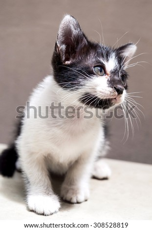 Little cute black and white kitten sit on white floor with tilt head and look up to sky, selective focus on its eye - stock photo