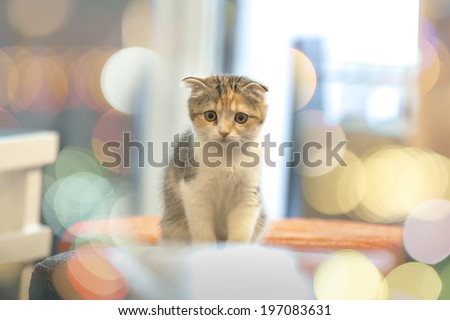 Little Cute Cat with Bokeh Background - stock photo