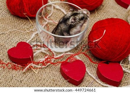 Little cute Djungarian (asian, Siberian, dwarf) hamster with wooden hearts and white and red balls of wool on canvas background