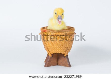 little cute duckling in basket isolated on white - stock photo