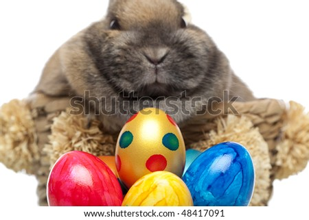 Little cute Easter bunny breeding in basket. In front of him are colored easter eggs. Isolated on white background.