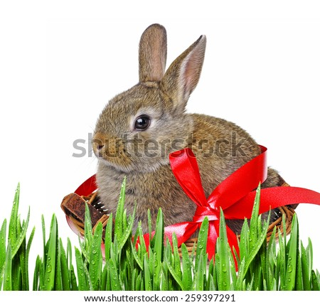 little cute easter rabbit in a basket - stock photo