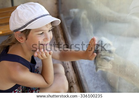little cute girl  hand to the glass to print of the paw of the lion which sleeping