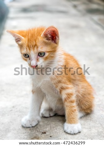 Little cute golden brown kitten plays at outdoor home backyard, selective focus on its eye