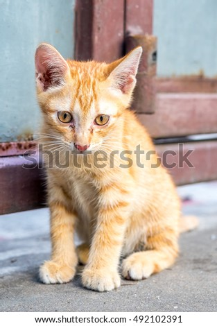 Little cute golden brown kitten sit on backyard outdoor concrete floor, selective focus on its eye