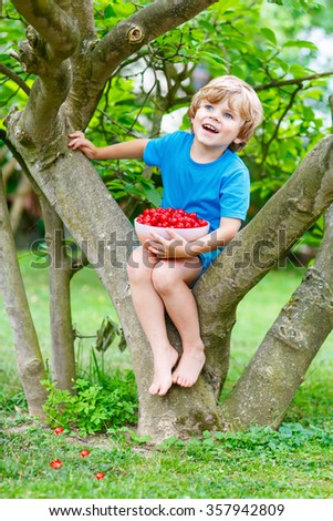 Little cute kid boy having fun with picking and eating cherries in domestic garden on warm summer day, outdoors. Healthy snack for children in summer. Kids helping with gardening - stock photo