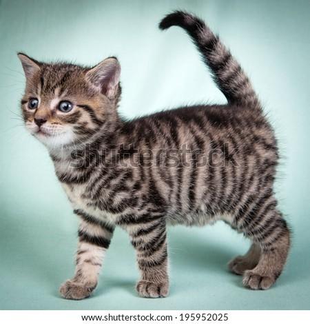Little cute kitten  - stock photo
