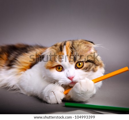 little cute kitten playing with colorful pens - stock photo