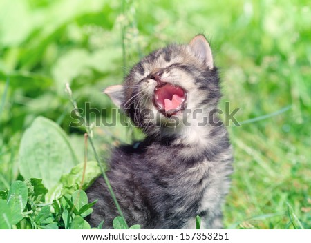 Little cute meowing kitten sitting in the grass - stock photo