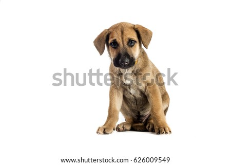 little cute mestizo puppy on white background
