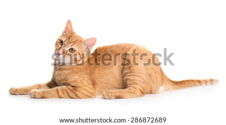 Little cute red cat isolated on white background
