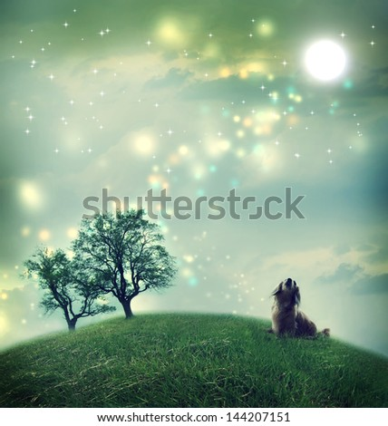 Little dachshund dog in a magical landscape in the night - stock photo