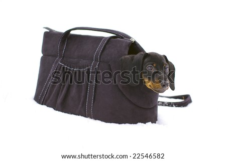 Little dachshund sitting in a special bag for dogs at the snow - stock photo