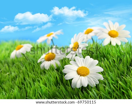 Little daisies in grass against a blue sky - stock photo