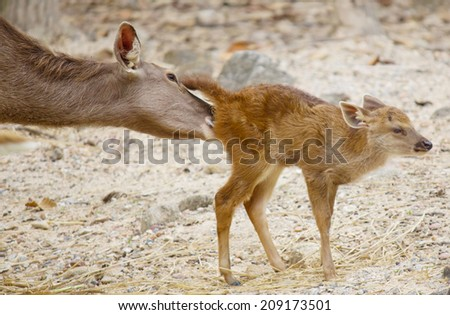 Little deer with his mom take care  - stock photo
