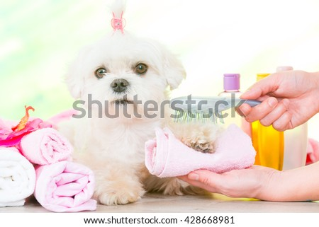 Little dog at spa being groomed with hairbrush - stock photo