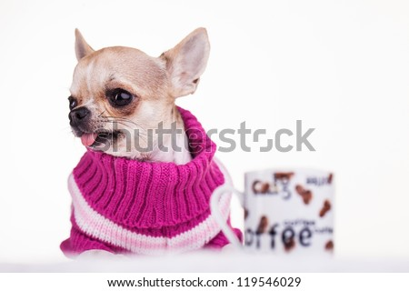Little dog dressed in pink wool with a cup of coffee - stock photo