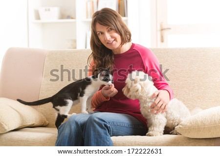 Little dog maltese and black and white cat sitting with owner on the sofa in home - stock photo