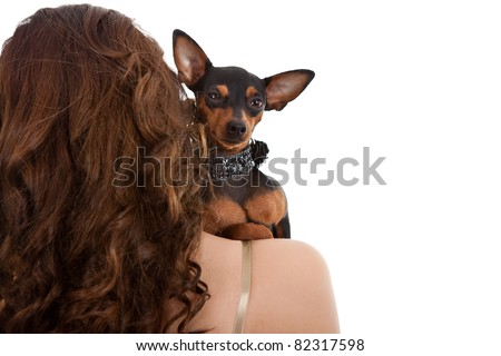 little dog posing on woman's shoulder, isolated on white background - stock photo