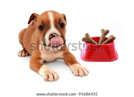Little dog puppy and red dog bowl with bones