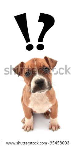 Little dog puppy is wondering - stock photo