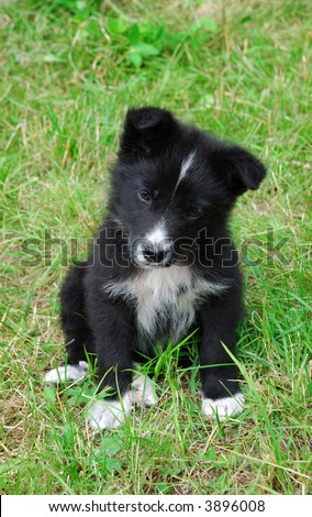 Little dog. Puppy on green grass. Country side house. Summer time.