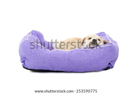Little dog puppy sleeping in his bed against a white background - stock photo