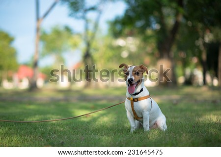 little dog sitting in grass