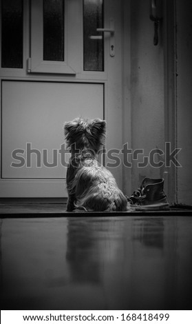 Little dog waiting for his owner. - stock photo
