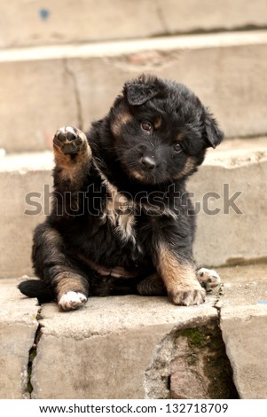 little dog waving - stock photo