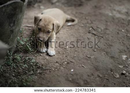 Little dog with sad look - stock photo